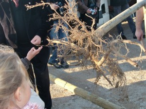 à quoi servent les racines ?